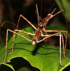 Điểm mặt các loài bọ hung hăng có vẻ ngoài đáng sợ