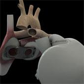 Phát triển tim nhân tạo từ mô tim bò