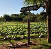 """Brazil phát triển """"siêu thực phẩm"""" chống suy dinh dưỡng"""