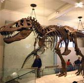 Giả thuyết mới về khủng long