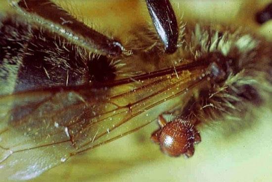 """Các loài côn trùng """"ăn hại"""" thích đi ăn bám"""