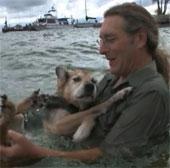 Video về chó Schoep