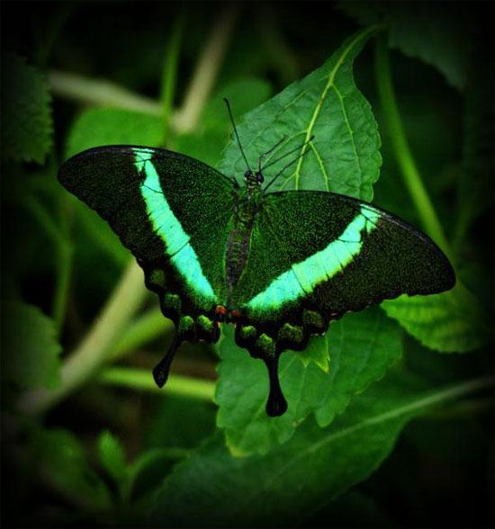 Viễn cảnh áo đổi màu như cánh bướm
