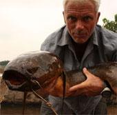 Video: Xem cá chình phóng điện giết chết cá sấu