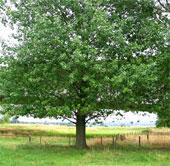 Giống cây mới giúp cải tạo đất