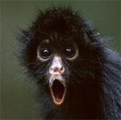 Phát hiện gây sốc về trí nhớ của khỉ