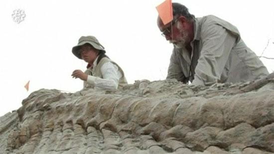 Phát hiện đuôi khủng long khổng lồ niên đại 72 triệu năm