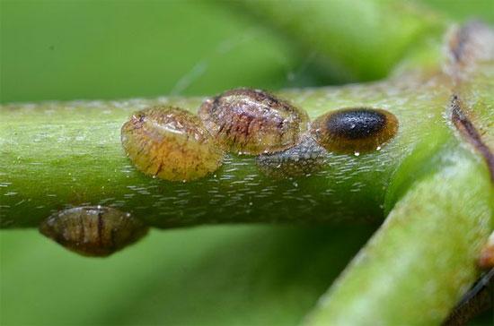 Canada phát triển sản phẩm thuốc trừ sâu an toàn