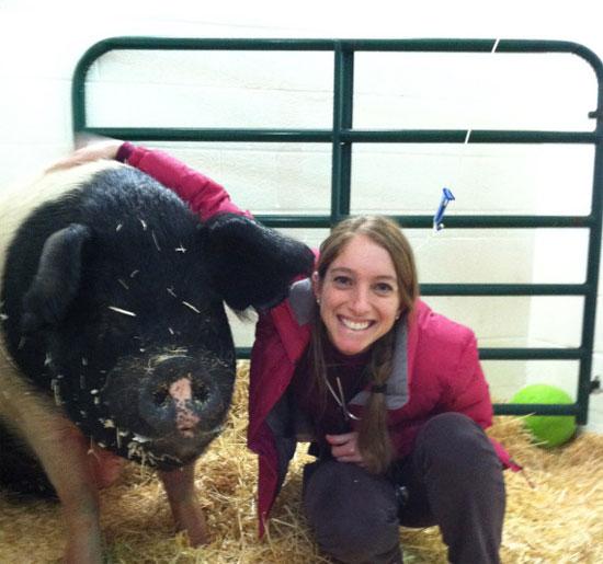 Chú lợn đầu tiên khỏi bệnh ung thư máu