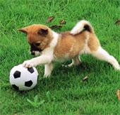 Chó không hề mù màu