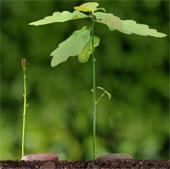 Góc cành cây chịu ảnh hưởng của trọng lực