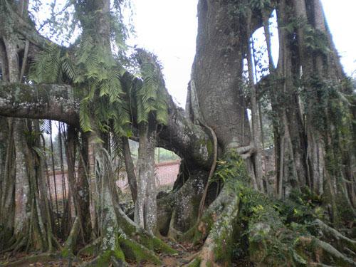 """Lý giải hiện tượng """"thần giao cách cảm"""" giữa cây và người"""
