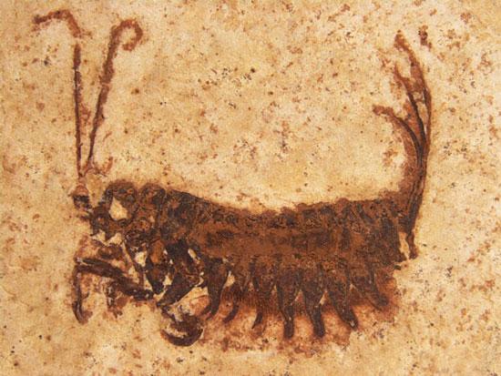 Phát hiện loài côn trùng cổ đại kỳ lạ