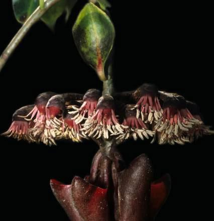 Thực vật cũng có ăng-ten chảo