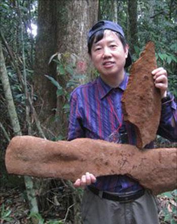 Giáo sư Yu Cheng Dai cầm hai mảnh vỡ của cây nấm khổng lồ tại tỉnh Hải Nam. Ảnh: BBC.