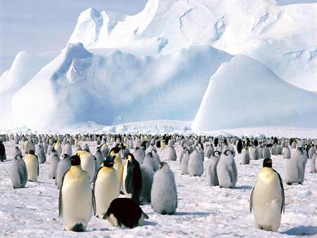 Nam Cực đang cao lên