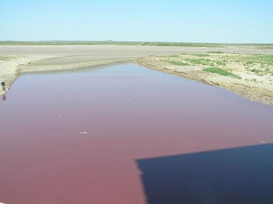 Nước trong hồ OC Fisher, bang Texas chuyển sang màu đỏ do hoạt động của nhóm vi khuẩn Chromatiaceae. Ảnh: Livescience.