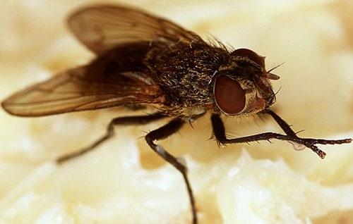 Máy bay siêu nhỏ mô phỏng côn trùng