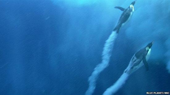 Những con chim cánh cụt có thể vọt lên khỏi mặt nước từ 2-3 mét.
