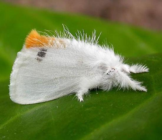 Ban bố lệnh giới nghiêm vì bướm