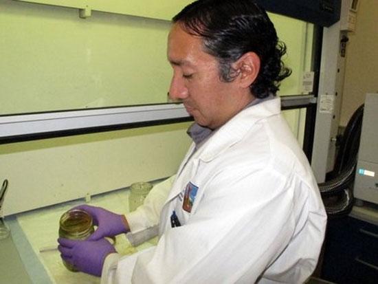 Mẫu chất màu cam đang được Emmanuel Hignutt thuộc Sở Bảo tồn môi trường ở Anchorage, Alaska kiểm tra (Ảnh: AP)