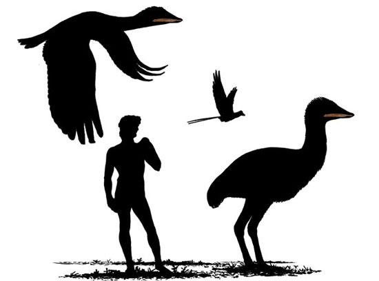 Chim khổng lồ cùng thời với khủng long