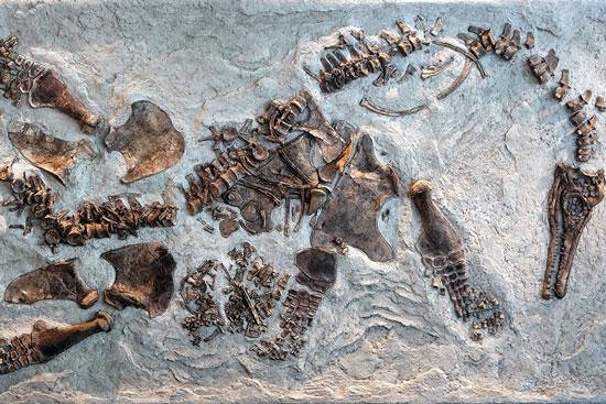 Tìm thấy hóa thạch của bò sát biển mang phôi thai