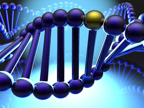 Con người có bao nhiêu gen và mỗi gen mang chức năng gì cho tới nay vẫn còn là câu đố.