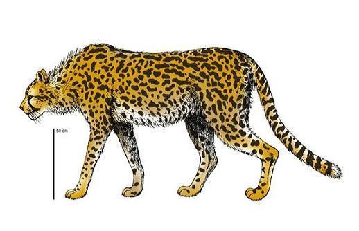 """Phát hiện hóa thạch báo """"sát thủ đẫm máu nhất"""" sống gần người"""