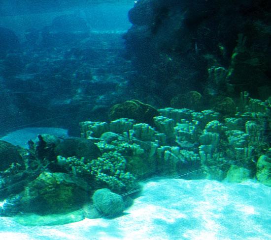 Đại dương từng có rất ít oxy