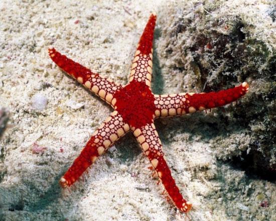 Nghiên cứu tác động của tiếng ồn với sinh vật biển