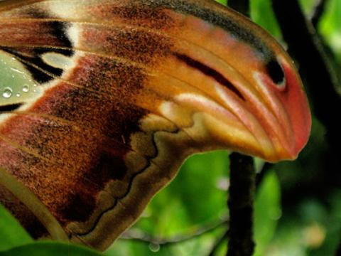 Hoa văn trên cánh bướm