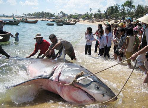 Những cuộc tấn công bí ẩn của cá mập