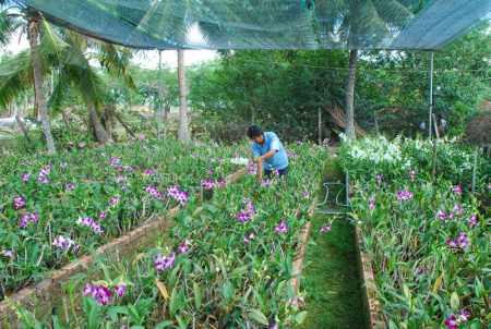 Mô hình nông nghiệp bền vững cho đất phèn