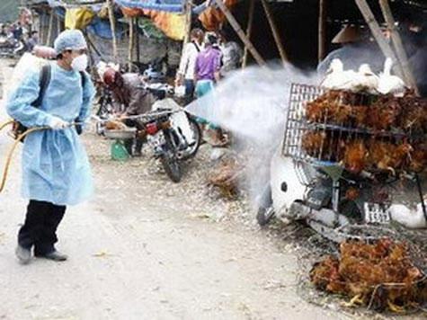 Cảnh báo đại dịch cúm gia cầm mới ở Việt Nam