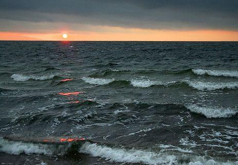 Biến đổi khí hậu tạo điều kiện cho vi khuẩn phát tán ở Bắc Âu