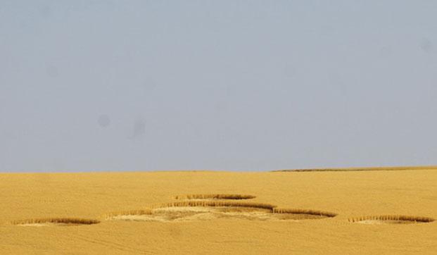 Những hình tròn giữa cánh đồng lúa mì gần thành phố Wilbur, hạt Lincoln, bang Washington, Mỹ.