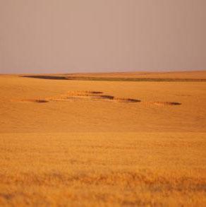Vòng tròn bí ẩn trên cánh đồng Mỹ