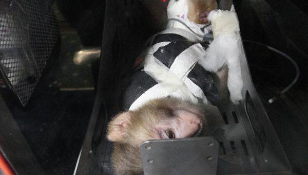 Một con khỉ được buộc trong mô hình cap-xun của Iran.