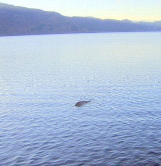 Đã tìm thấy quái vật hồ Loch Ness
