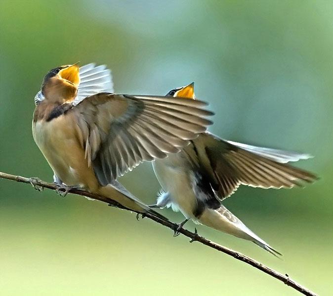 Chim hót linh hoạt hơn khi thời tiết biến động