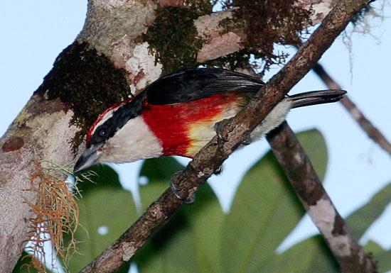 Phát hiện loài chim lạ màu sắc sặc sỡ