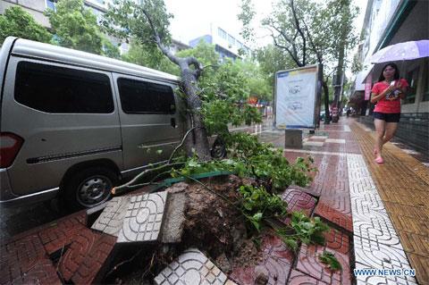 Cây lật gốc do bão Haikui tại trung tâm huyện Sanmen, Chiết Giang.