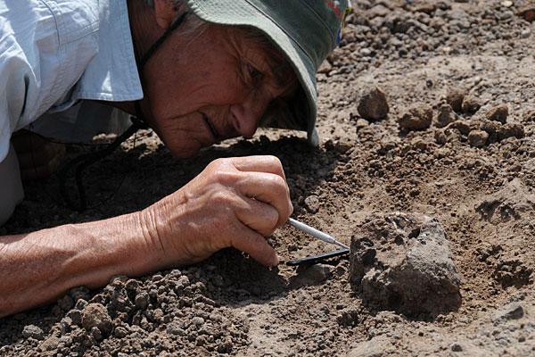 Nhà cổ sinh vật Meave Leakey cẩn thận khai quật nhửng mảnh hóa thạch xương sọ người ở một nơi gần vùng Koobi Fora ở phía bắc Kenya