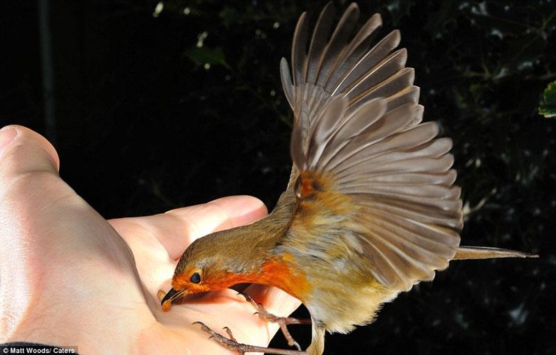 Ảnh đẹp: Khoảnh khắc chim ăn sâu trên tay người