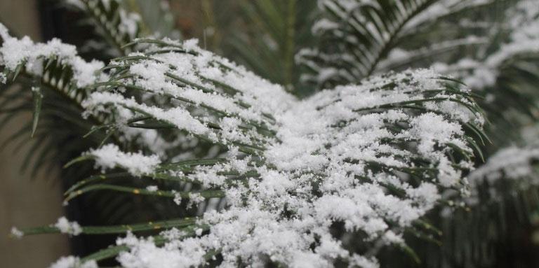 Dân Nam Phi rộn ràng đón trận tuyết hiếm hoi