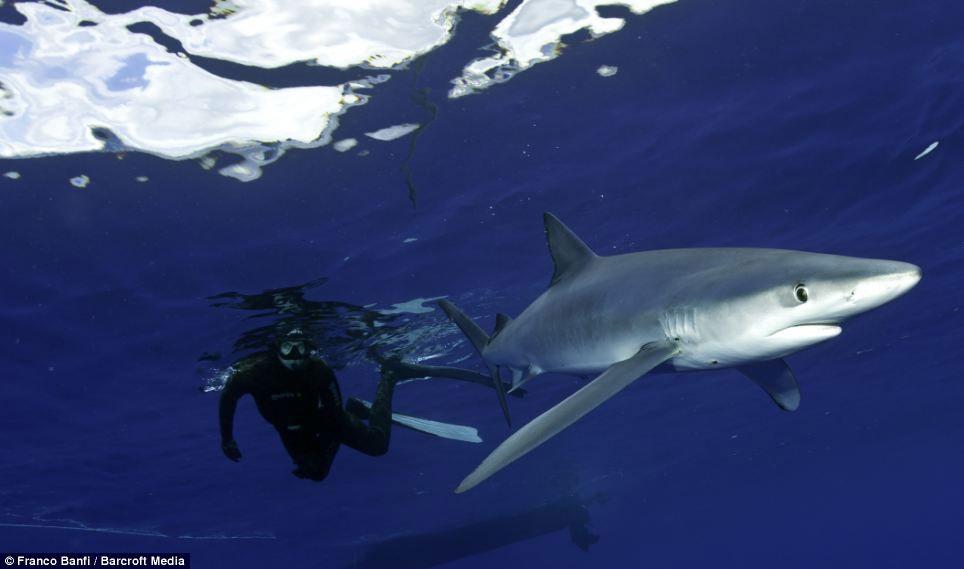 Ảnh đẹp: Bơi cùng kẻ săn mồi đáng sợ nhất đại dương