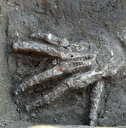 Tại sao chiến binh Ai Cập lại cắt tay phải kẻ thù?