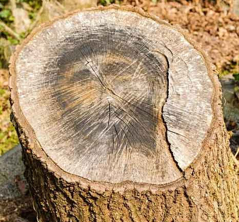 Video: Hình Chúa Jesus hiện trên gốc cây