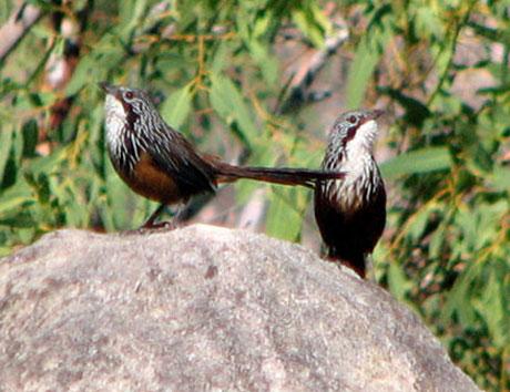 Ninh Bình sắp có công viên bảo tồn động vật hoang dã